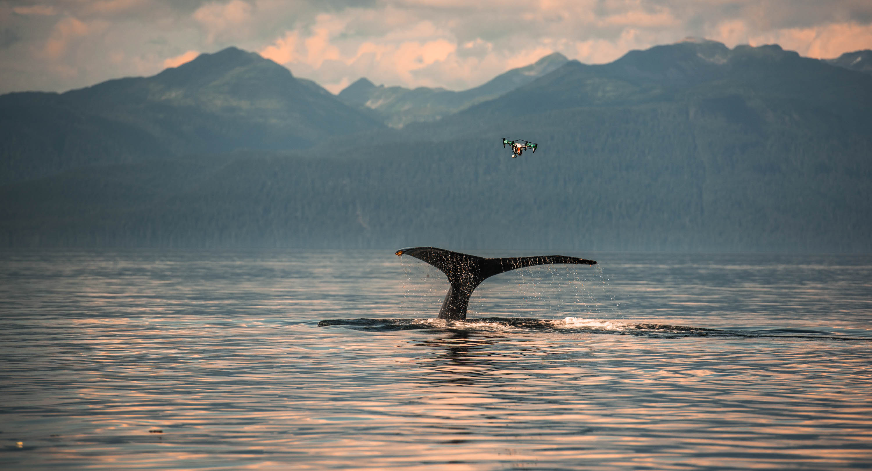 Intel partners with Parley for the Oceans and Oceans Alliance on SnotBot to provide emerging artificial intelligence and drone technologies which analyze whale blow to indicate the health of our oceans.