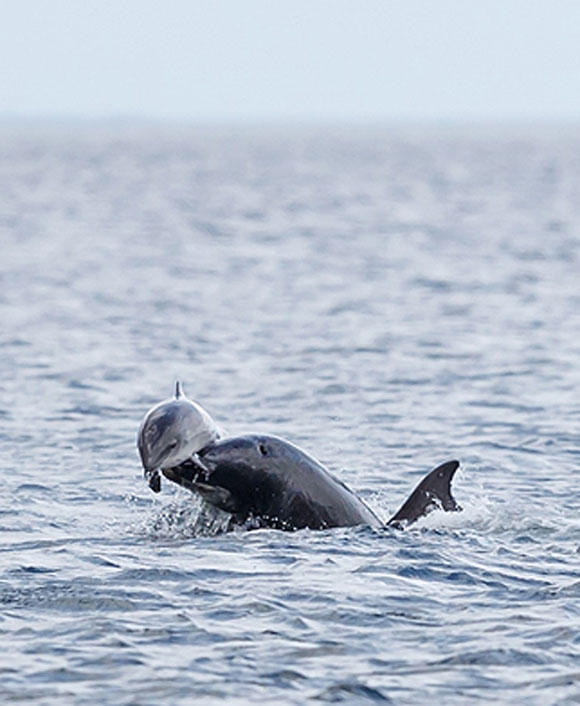 dolphins and porpoise