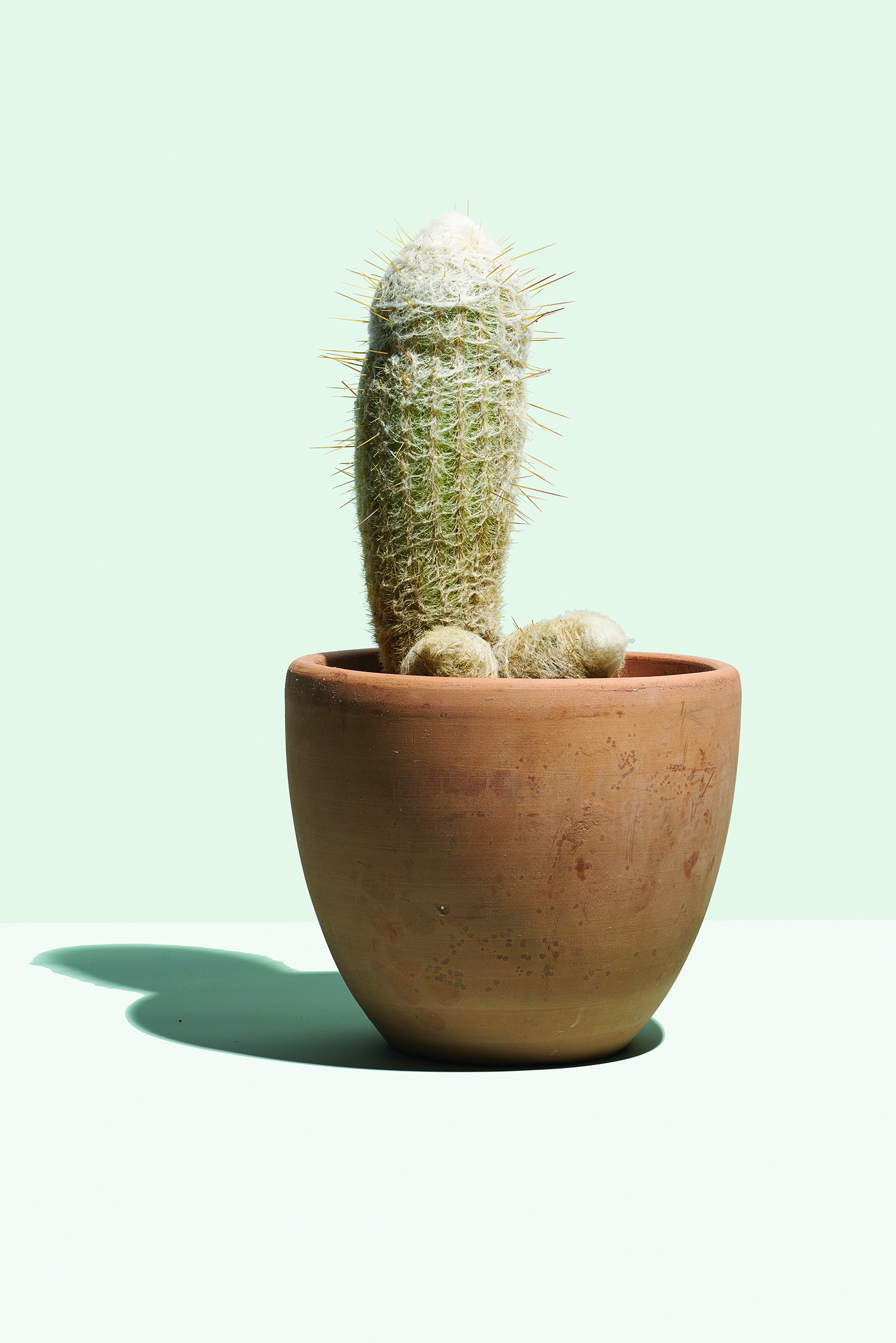 photo of a cactus used in the Hims ad campaign