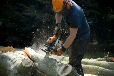 Tree cutting, Forestry Commission