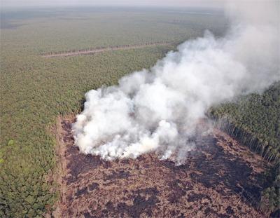 Peatland, Indonesia: © Greenpeace/ John Novis