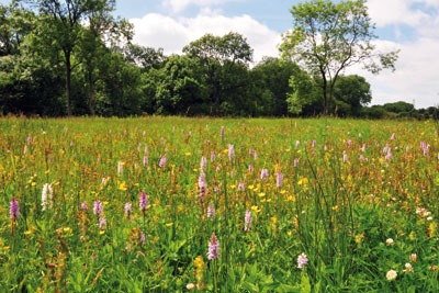 Companies wanting to profit from environmental protection could benefit from biodiversity offsetting (photo: Natural England)