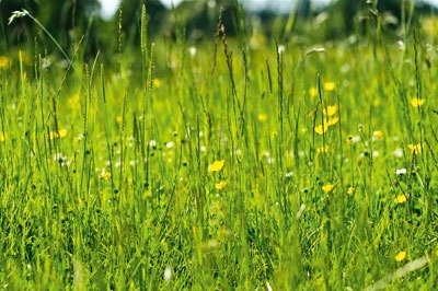 Meadows are often lost to developments (photograph: Photoverulam, CC by SA 2.0)