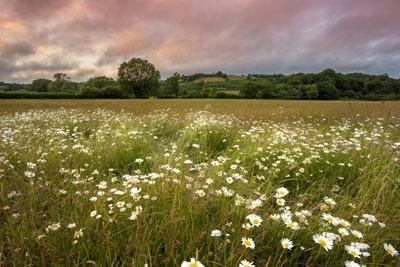 English meadow. Credit: Anna Curnow, Dreamstime.com