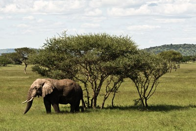 The national wildlife crime unit deals with issues such as the illegal ivory trade (Credit: William Warby CC BY 2.0)