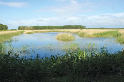 UK wetlands would be difficult to re-create. Credit: Karen Roe