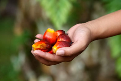 95% of the palm oil used to make Sainsbury's own-brand products is now certified sustainable (Photo: Laurent-Dambies)