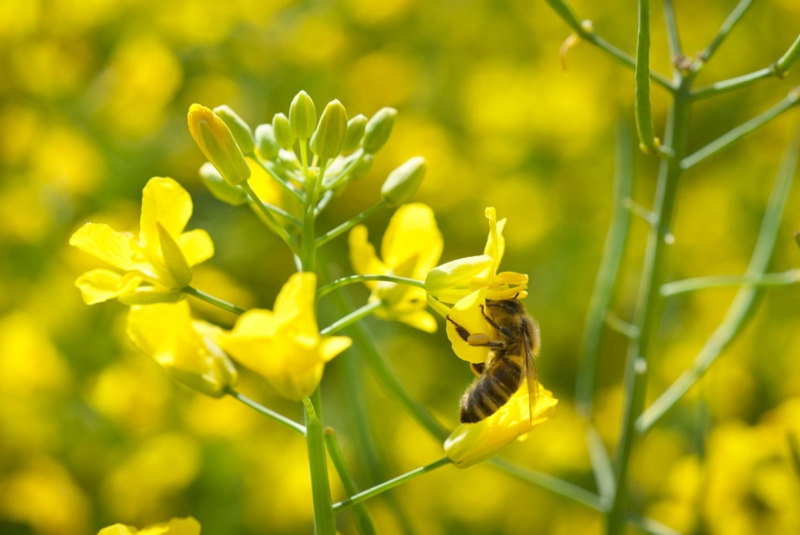 Some fear that neonicotinoids harm pollinator populations (photograph: Dusan Kostic/123RF)