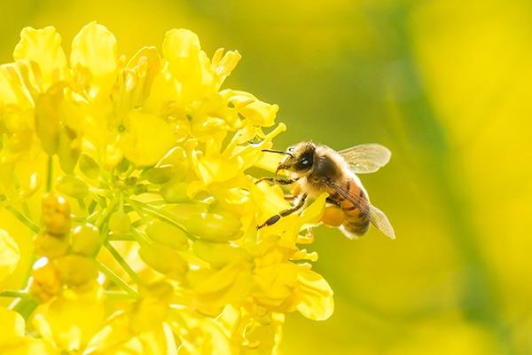 bee on flower neonicotinoids