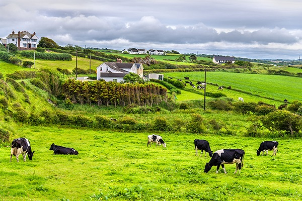 The whole of Northern Ireland was designated as a nitrate vulnerable zone under the directive in 2011. Photograph: Leonid Andronov/123RF