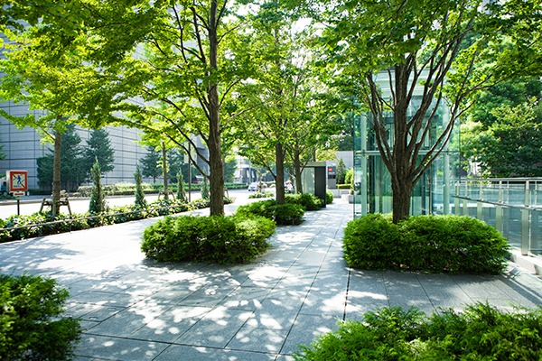 The guidance cautions that urban trees may not always benefit air quality. Photograph: Sheeler/123RF