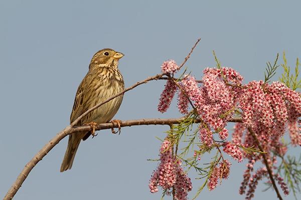 England's natural environment continues to decline. Photograph: Georgios Alexandris/123RF