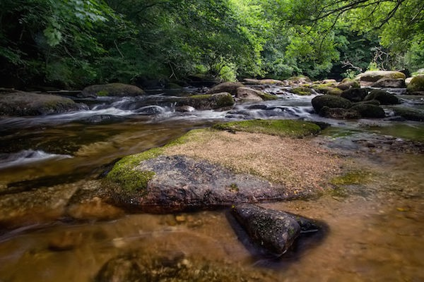 East Dartmoor nature reserve piloted the approach. Photograph: daniyaros/123RF