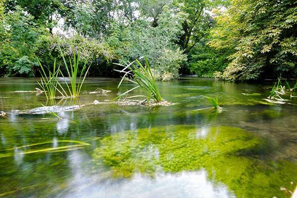 The river Itchen. Photograph: epfop/123RF
