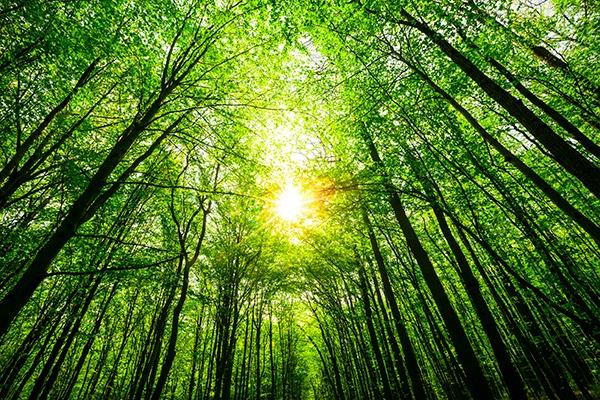 Trees. Photograph: Volodimir Kalina/123RF