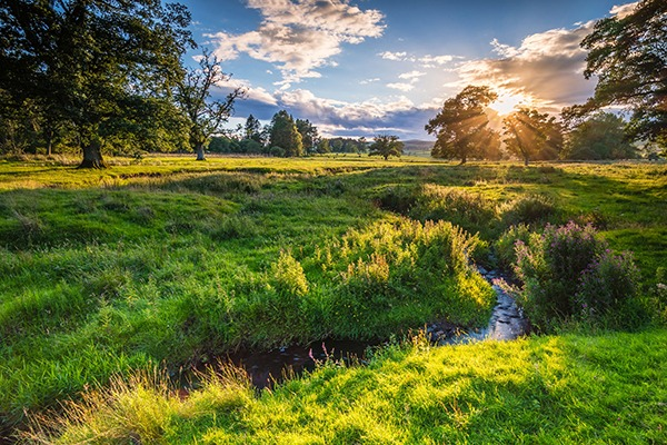 Field with trees and stream. Photograph: David Ronald Head/123RF