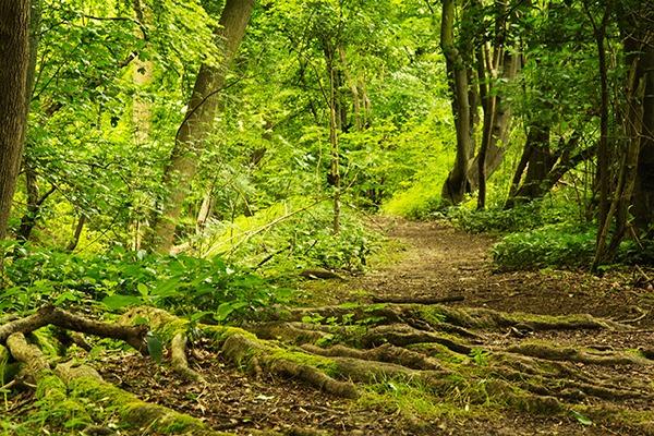 English woodland. Photograph: Christopher Hall/123RF