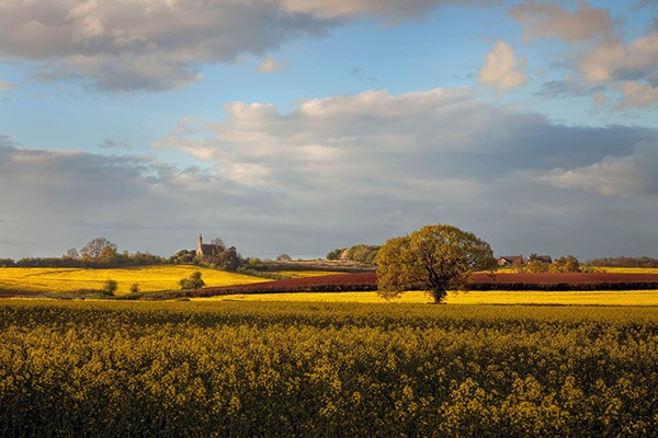 Farming landscape with fields of rapeseed. Photograph: Andrew Roland/123RF