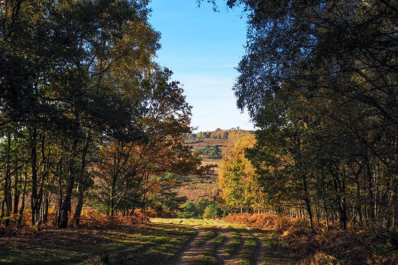 Ashdown forest, Sussex