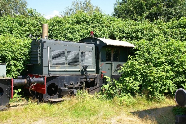 Japanese knotweed overwhelms a steam engine