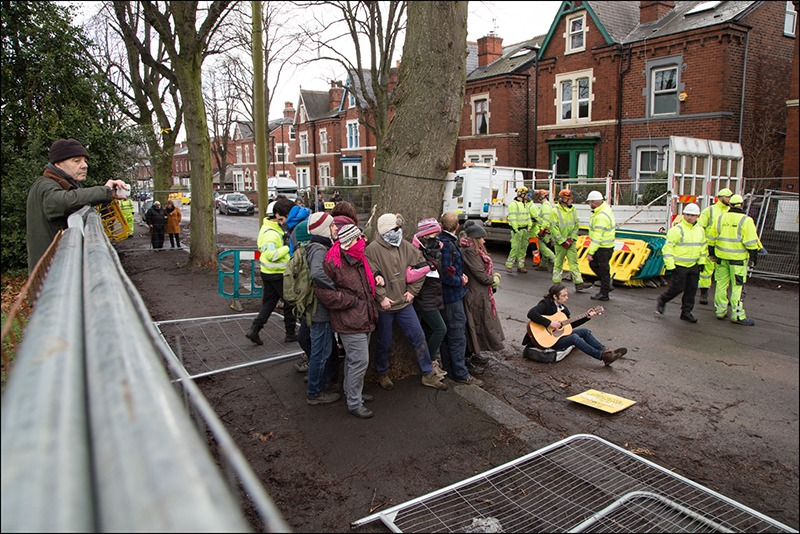 Sheffield Tree Action Groups protest against tree removal