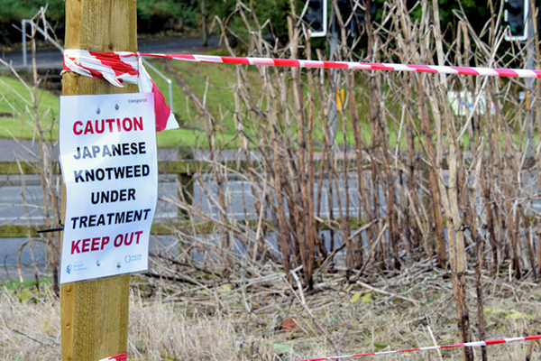 Knotweed treatment warning sign