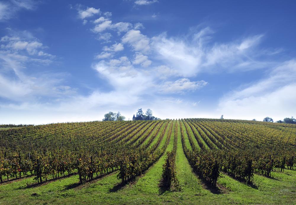Vineyard, France